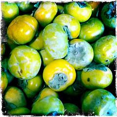 間引いた青柿が悪玉コレステロールを減少
