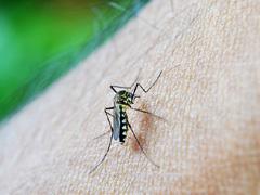 蚊が媒介するデング熱のイメージ画像