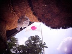 出雲大社の日章旗